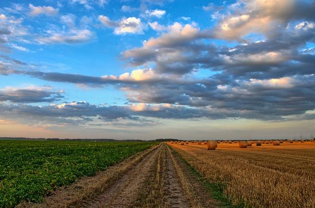 Champ de cultures et ciel bleu avec quelques nuages.