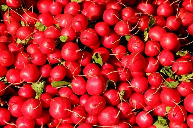Monticule de radis ronds de saison.